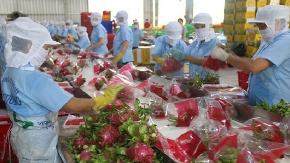 Agro-forestry-aquatic product exports up nearly 27% in seven months