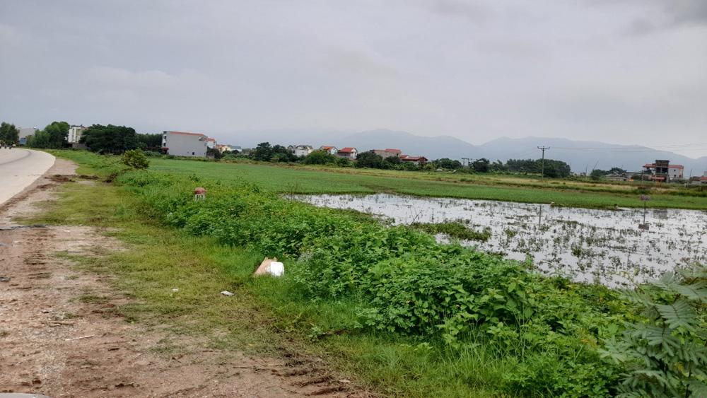 bất động sản, đất đai, Bắc Giang, đấu giá đất