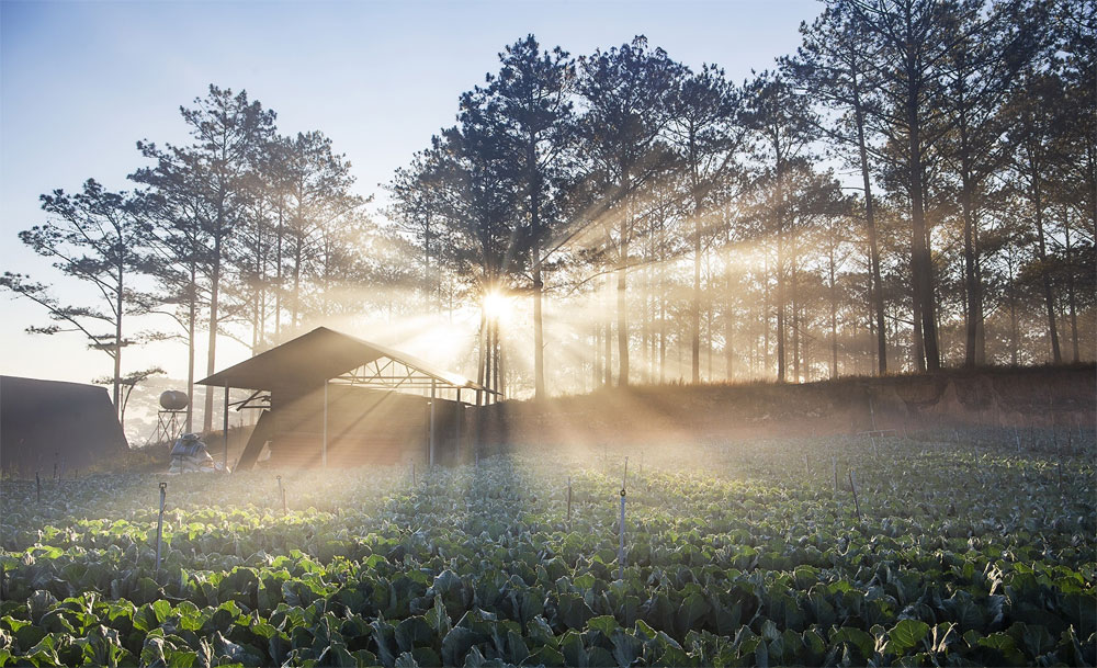 Green, quiet side, Da Lat, green pine forests, white clouds, peaceful landscape, Central Highlands town