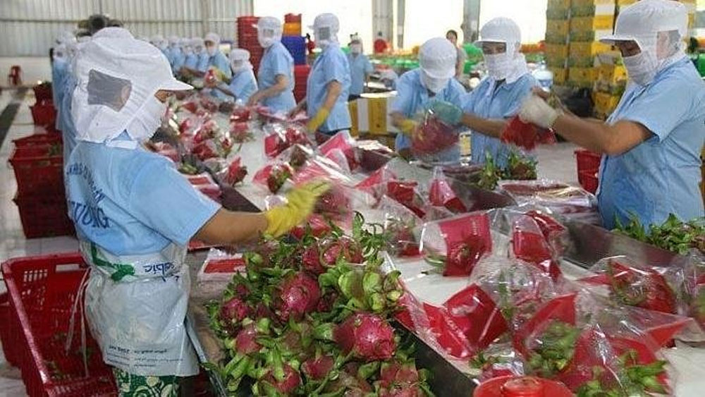 Vietnamese agricultural products aim for the Netherlands market