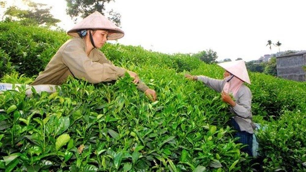 Vietnamese tea market share increases in Australian market