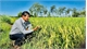 Loc Troi Group helps in confirming DNA for Vietnam's rice varieties
