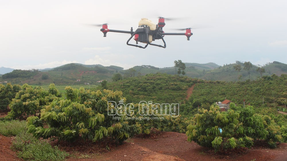 Demonstrating drone technology, spray pesticides, Bac Giang province, automatic vehicle, effective spraying, different types of terrain