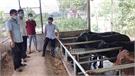 Phấn đấu tăng đàn trâu, bò thịt lên 12 nghìn con