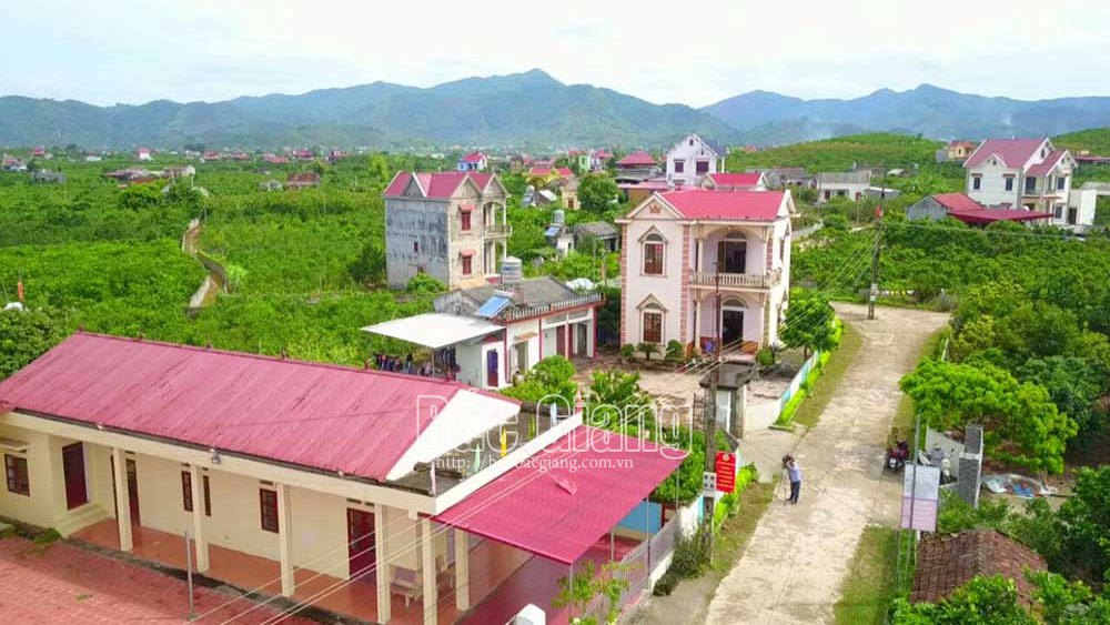 Bac Giang builds and revamps infrastructure of high value fruit growing area
