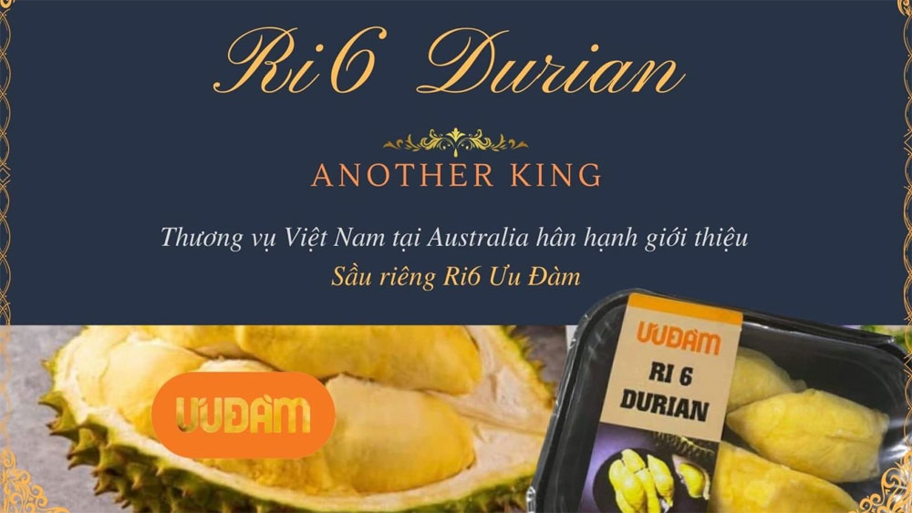 Vietnamese durians, gain foothold, Australia, quick sold-out, customs clearance, local distributors' demand