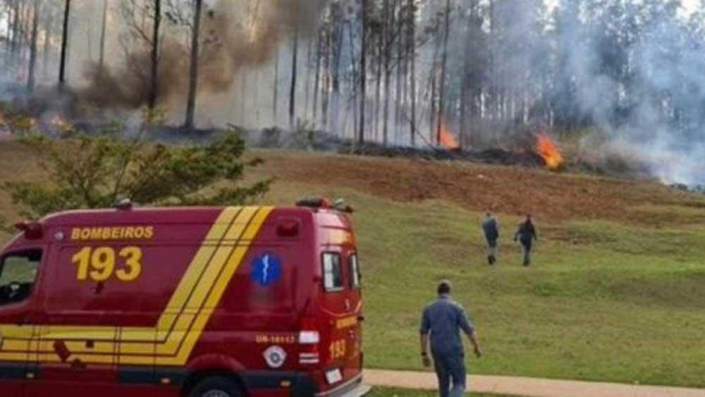Máy bay, lao xuống, rừng ở Brazil, 7 người, thiệt mạng
