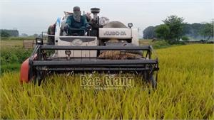 Vận động nông dân Bắc Giang canh tác lúa thân thiện với môi trường