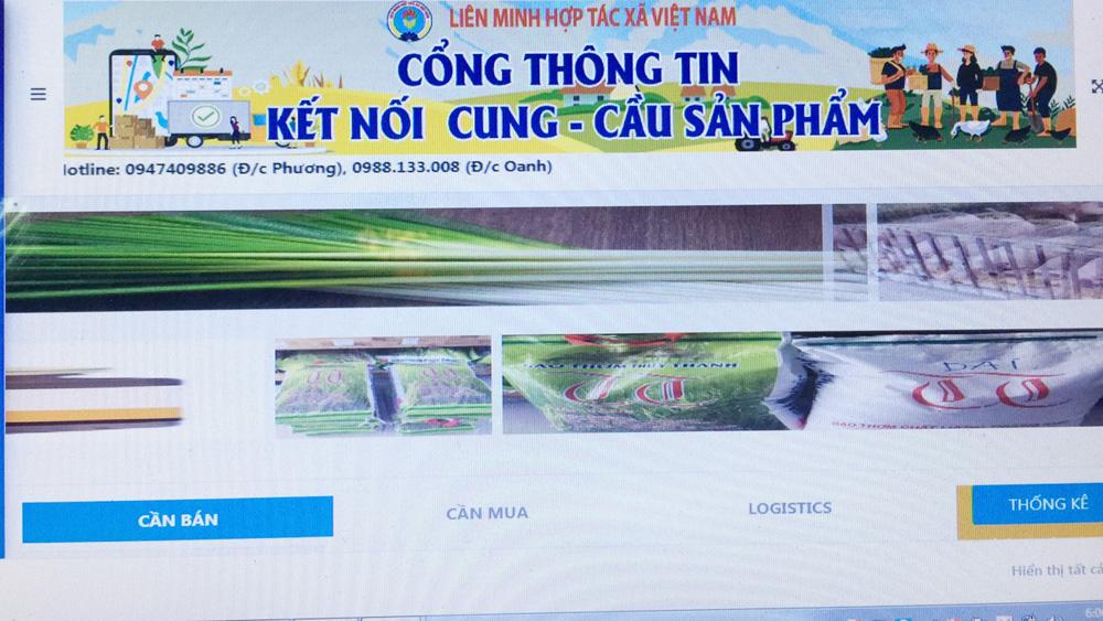 nông sản an toàn, nông sản, Bắc Giang,  Chương trình kết nối về tiêu thụ hàng hóa cho hợp tác xã