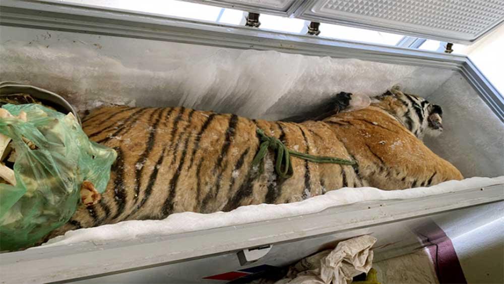 Phát hiện xác hổ 160 kg trong tủ lạnh