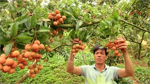 25 outstanding agricultural products honored in Bac Giang for third time