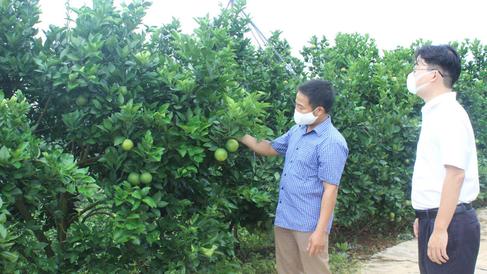 Building traceability system for Luc Ngan oranges