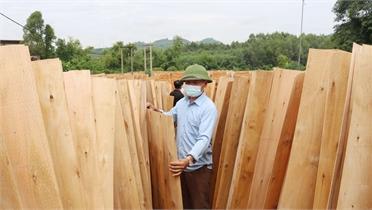 Bóc gỗ... ra tiền tỷ