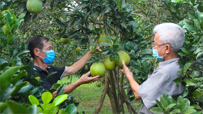 Lạng Giang: Đa dạng sản phẩm nông nghiệp nông thôn tiêu biểu