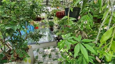Chi 400 triệu đưa vườn quê lên sân thượng