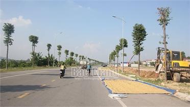 Nhiều hộ dân ở Việt Yên phơi thóc trên đường gây mất an toàn giao thông