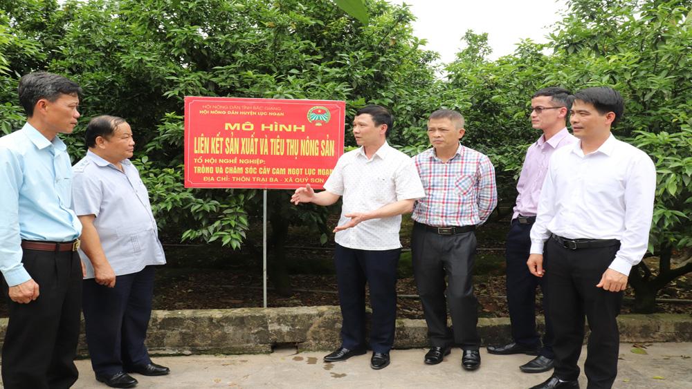 Ông Đinh Khắc Đính, Phó Chủ tịch T.Ư Hội Nông dân Việt Nam (thứ 2 từ trái qua) cùng lãnh đạo Ban Dân vận Tỉnh uỷ, Hội Nông dân tỉnh thăm mô hình liên kết sản xuất và tiêu thụ cam ngọt tại thôn Trại Ba, xã Quý Sơn, huyện Lục Ngạn (tháng 2/2021).