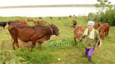 Chủ động phòng, chống đói, rét và dịch bệnh cho đàn vật nuôi vụ đông xuân