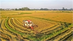 Vietnam likely to achieve rice export target this year