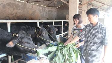 Chào mừng ngày Phụ nữ Việt Nam 20/10: Tạo động lực khởi nghiệp, thoát nghèo
