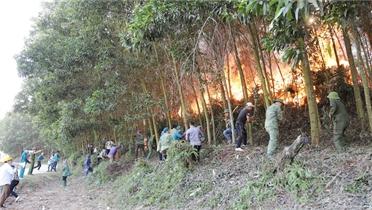 Tăng nguồn lực, cấp bách phòng, chống cháy rừng