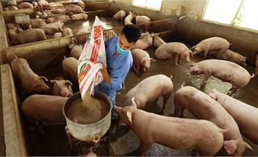 Phó Thủ tướng Lê Văn Thành: Sớm có giải pháp hỗ trợ bà con tiêu thụ, bình ổn giá lợn