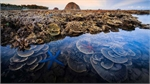 Coral reef stunner captures second prize in UK contest