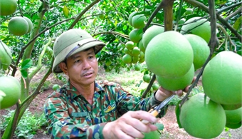 Luc Ngan improves citrus quality and creates sustainable trend