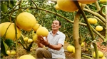 Bac Giang strives to enter top three provinces for biggest fruit value nationwide